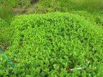 【イベント報告】霧ヶ谷湿原の植生モニタリング  夏