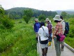 【イベント案内】霧ヶ谷湿原の植生調査(夏)