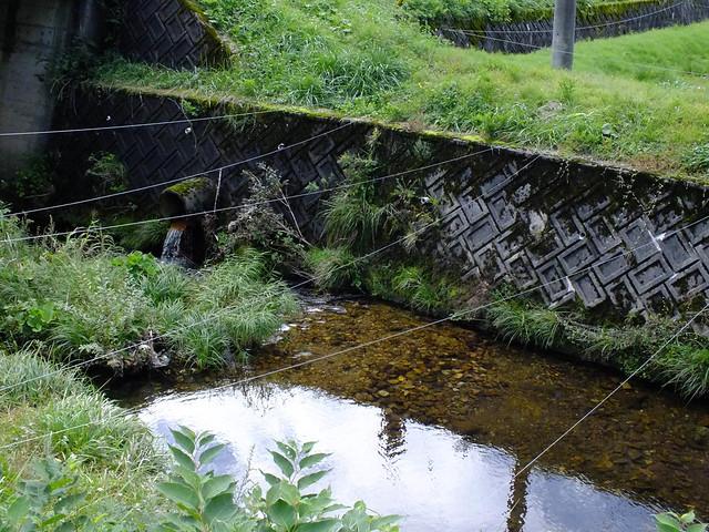 前回の保全活動で整備した産卵床の1つ.下流にはサツキマスが確認された.