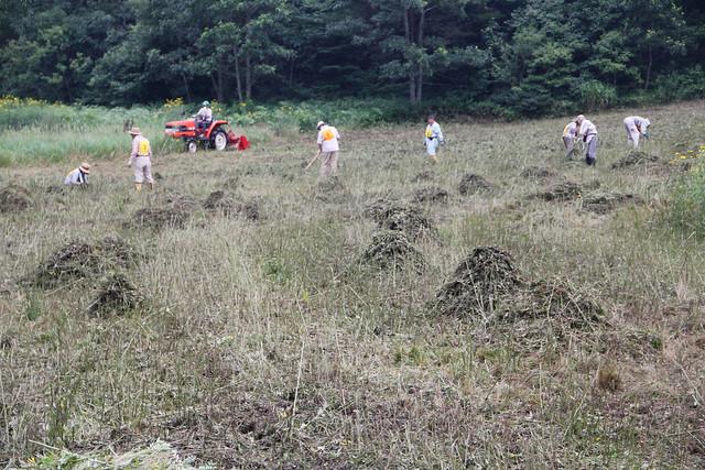 刈った草を集めて小積みにしていく.