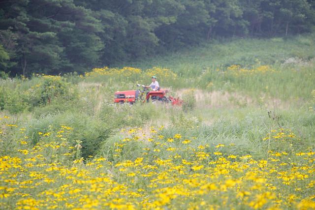 トラクターにのった高木さんがどんどんと刈っていきます.