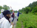 【イベント報告】霧ヶ谷湿原の植生調査:夏