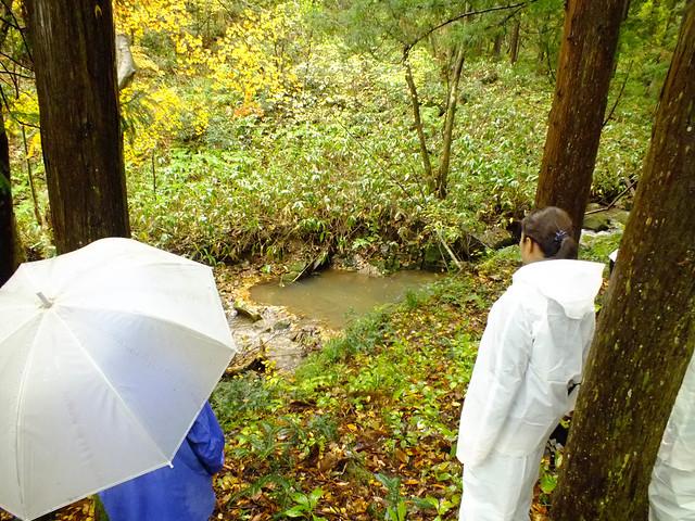 観察会終了後もゴギを探す.雨が弱まりゴギの姿も見られた.