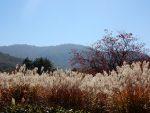八幡の秋色