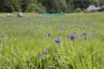 【お知らせ】高原の自然館入館無料の日について