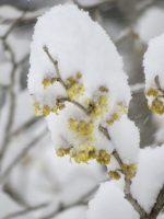 久しぶりの雪景色とちっちゃな春と(2021.2.17)