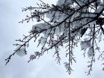 雪の大輪(2016.12.17)