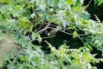 【イベント案内】龍頭山の野鳥観察会
