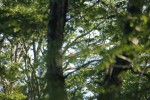 【イベント案内】ブナ林の野鳥観察会