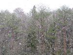 雪、降ってます!!(2019.4.1)