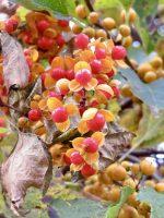 秋の色いろ(2020.10.25)