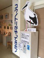 【お知らせ】「コウノトリがやってきた!」@北広島町図書館(2017.8.3)