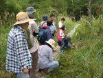 【イベント案内】霧ヶ谷湿原の植物観察会(申し込み締め切りました)