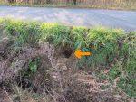 【注意】千町原で、クロスズメバチの巣が見つかりました(2020.10.31)