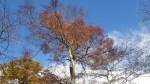 【八幡の秋色3】苅尾山周辺(2015.11.3)