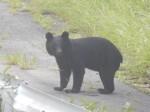 【重要なお知らせ】クマにご注意ください!
