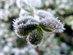 冷えた朝と霜と鳥(2019.1.25)