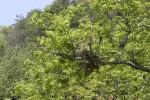 【観察会中止のお知らせ】牛ヶ首山の春植物観察会