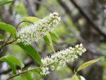 季節の花々(2020.5.13)