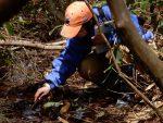 【イベント案内】霧ヶ谷湿原でカスミサンショウウオの繁殖を確認しよう